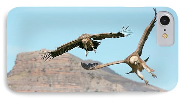 Griffon iPhone 7 Case - Griffon Vultures Flying by Nicolas Reusens