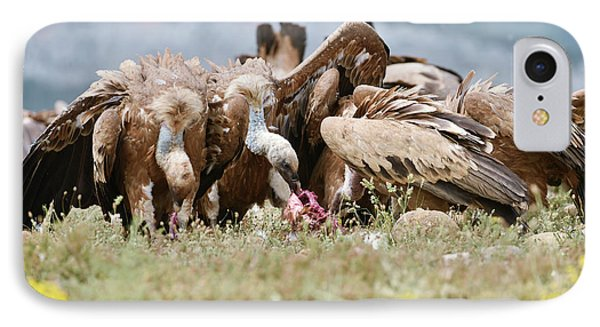 Griffon Vultures Scavenging IPhone 7 Case by Dr P. Marazzi