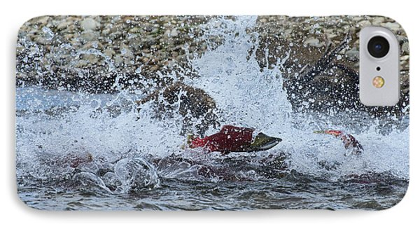 Brown Bear Chasing Salmon While Salmon Jump To Escape Phone Case by Dan Friend