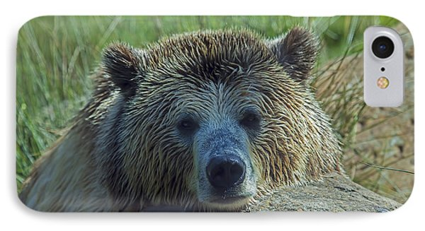 Grizzly Bear Resting Phone Case by Garry Gay