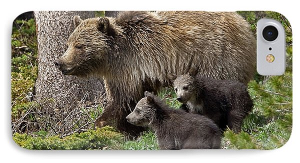 Grizzly Bear With Cubs IPhone Case by Jack Bell