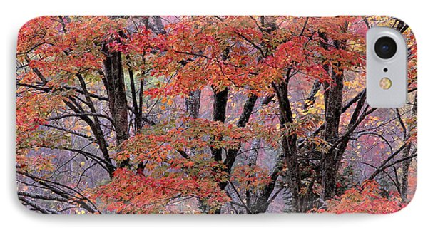 Groton Forest Maples IPhone Case by Alan L Graham