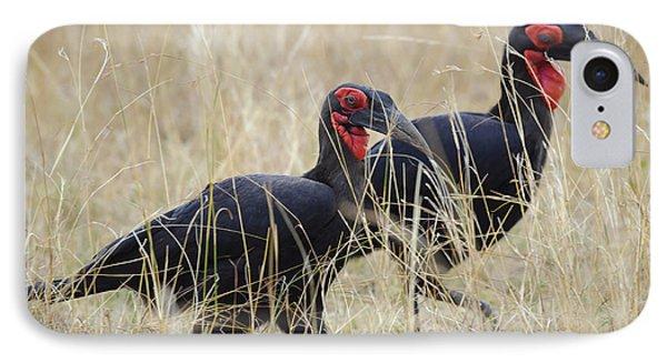 Ground Hornbills IPhone Case by John Shaw