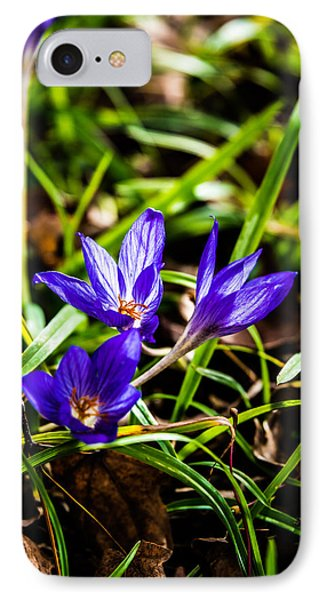 Hocus Crocus IPhone Case