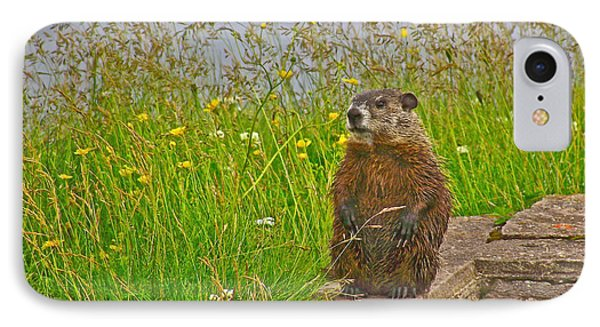 Groundhog At Point Amour In Labrador IPhone Case by Ruth Hager