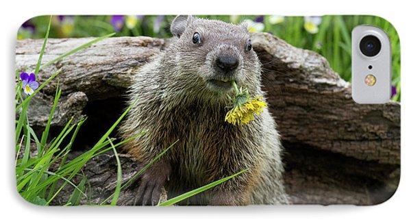 Groundhog  Kit Marmota Monax IPhone Case by Debbie Dicarlo