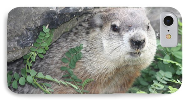 Groundhog Making Sure It Is Safe Phone Case by John Telfer