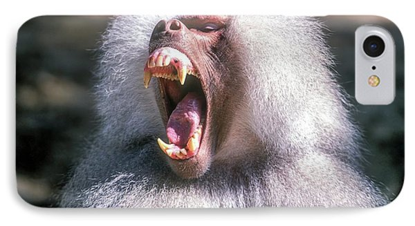 Growling Dominant Male Hamadryas Baboon IPhone Case by Photostock-israel