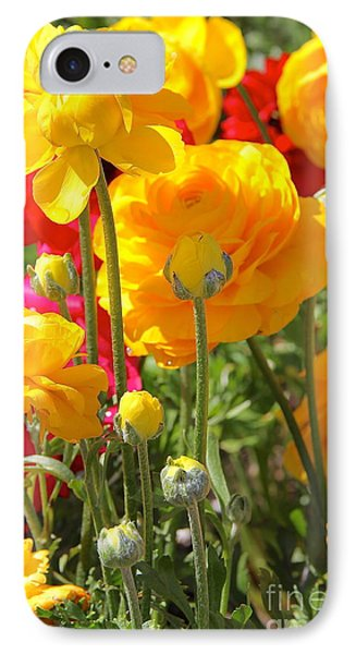 Growth Of A Ranunculus IPhone Case