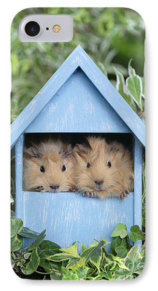 Guinea Pig In House Gp104 IPhone Case by Greg Cuddiford