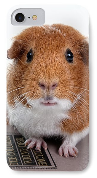 Guinea Pig Talent IPhone Case by Susan Stone