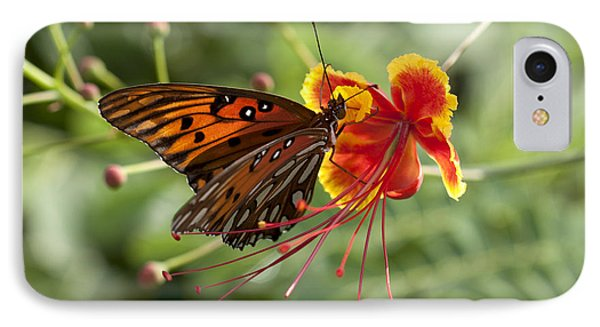 IPhone Case featuring the photograph Gulf Fritillary Photo by Meg Rousher