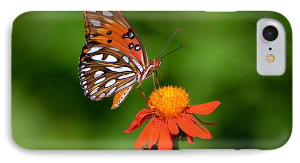 Gulf Fritillary Underwing IPhone Case by Jodi Terracina