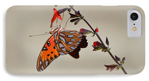 Gulf Fritillary Underwings IPhone Case by Jodi Terracina