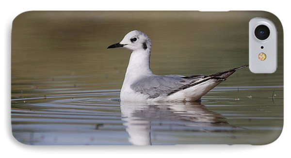 IPhone Case featuring the photograph Gull In Morning Light by Ruth Jolly