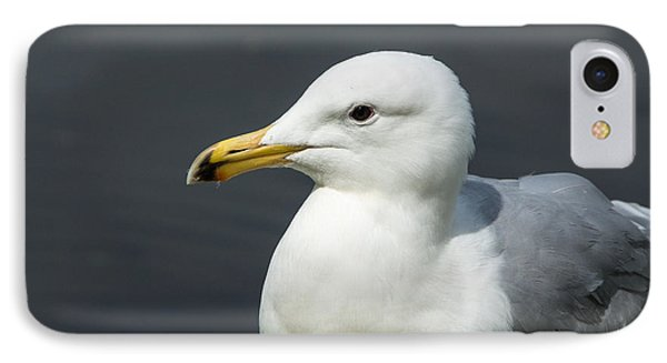 Gull IPhone Case by Michele Wright