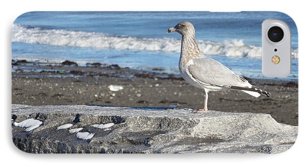 IPhone Case featuring the photograph Seagull  by Eunice Miller