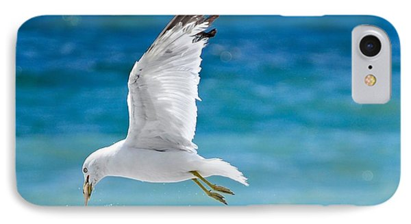 Gull With Fish IPhone Case by Elaine Manley