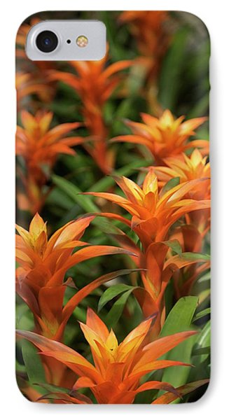 Guzmania Sanguinea Flowers IPhone Case by Maria Mosolova