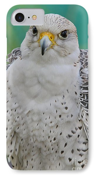 Gyrfalcon IPhone Case by Deborah Benoit