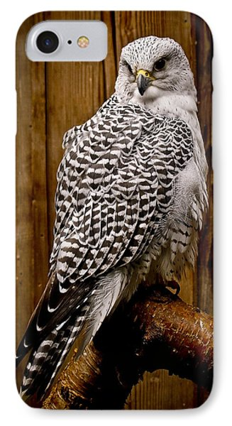 Gyrfalcon Perched IPhone Case by Steve McKinzie