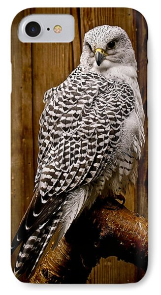 Gyrfalcon Perched IPhone Case