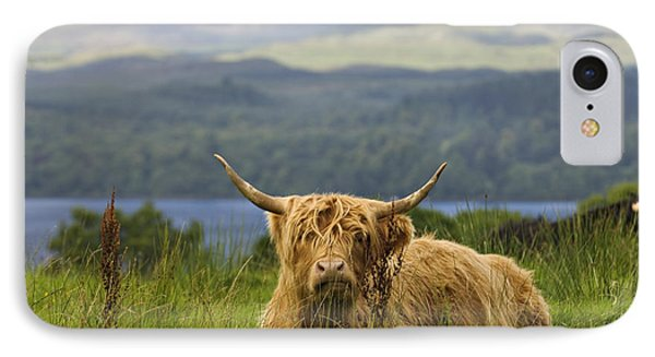 Hairy Coo - D002456 IPhone Case by Daniel Dempster