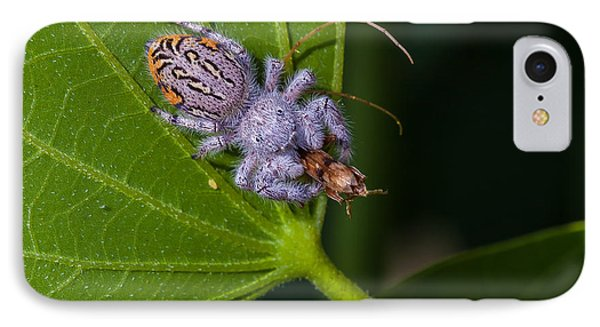 Hairy White Spider Eating A Bug Phone Case by Craig Lapsley