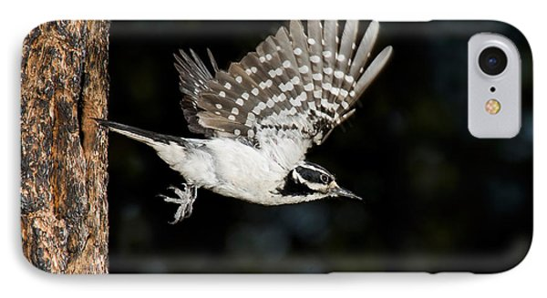 Hairy Woodpecker IPhone Case by Anthony Mercieca