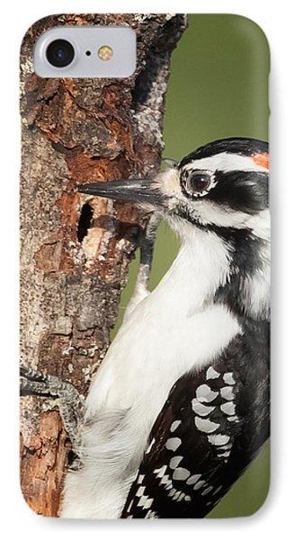Hairy Woodpecker IPhone Case by Bill Wakeley