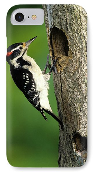 Hairy Woodpecker (picoides Villosus IPhone Case by Richard and Susan Day