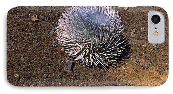 Haleakala Silversword Argyroxiphium IPhone Case by Panoramic Images