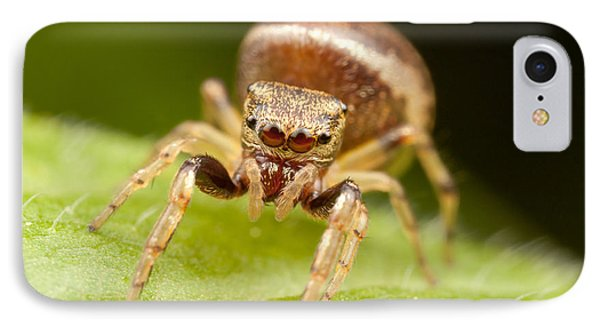 Hammerjawed Jumper I Phone Case by Clarence Holmes