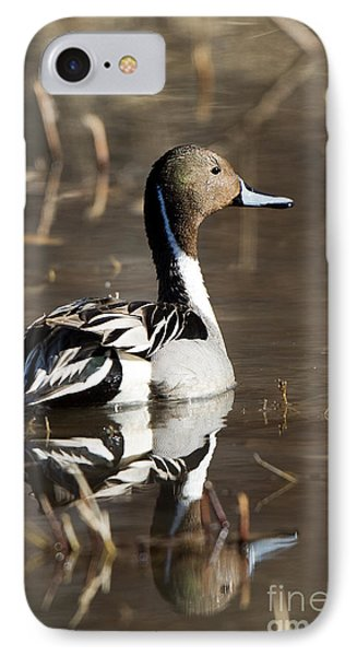 Northern Pintail Duck IPhone Case by Martha Marks