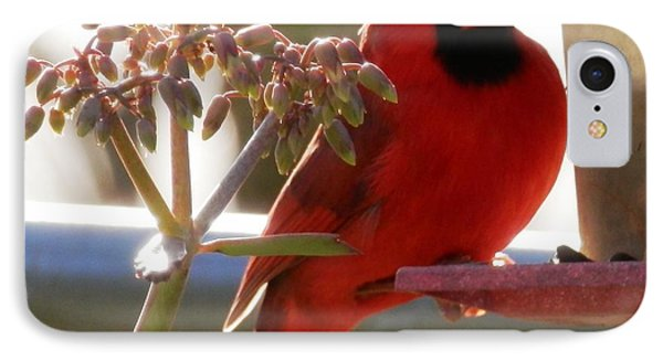 Handsome Red Male Cardinal Visiting IPhone Case by Belinda Lee