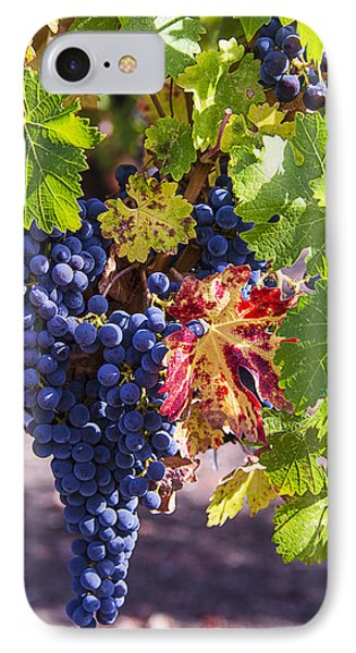 Hanging Grapes IPhone Case