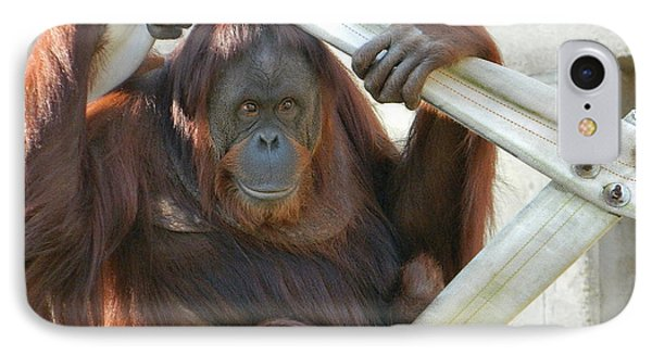 IPhone Case featuring the photograph Hanging Out - Melati The Orangutan by Emmy Marie Vickers