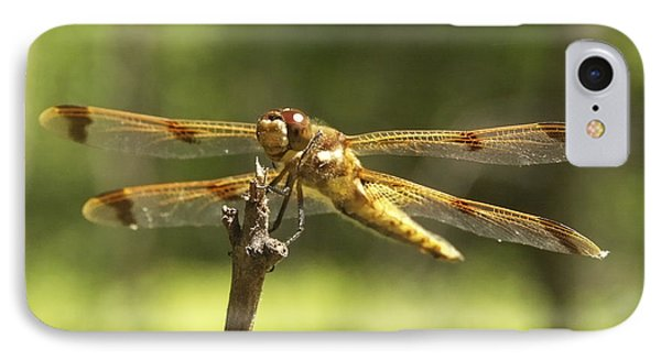 Happy Dragonfly IPhone Case by Patrick Fennell