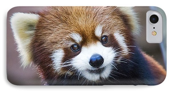 Happy Red Panda IPhone Case by Jaki Miller