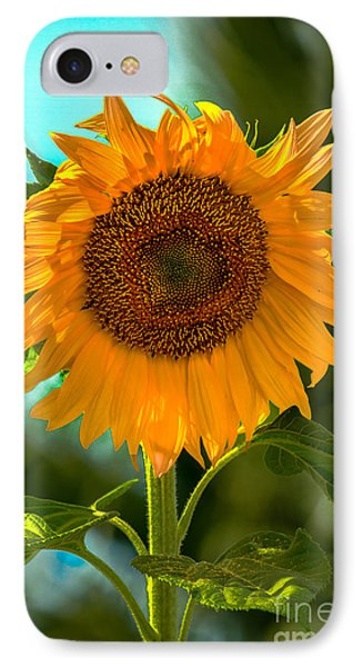 Happy Sunflower IPhone Case by Robert Bales