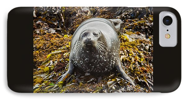 Harbor Seal IPhone Case by Alice Cahill