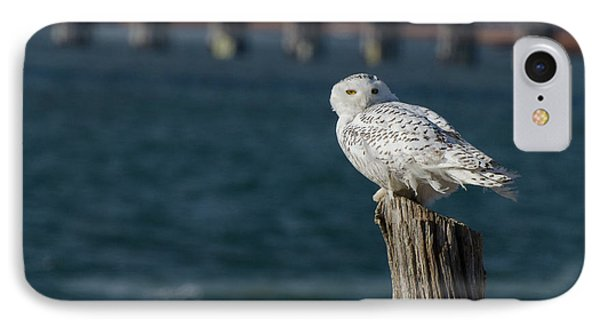 Harbor Sentry IPhone Case by Stephen Flint