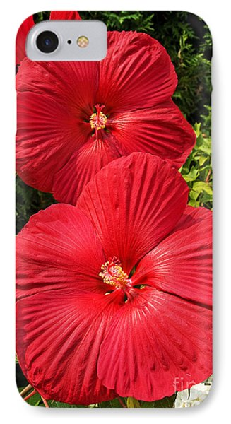 Hardy Hibiscus IPhone Case by Sue Smith