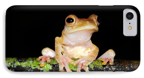 Harlequin Flying Frog, Malaysia IPhone Case by Fletcher & Baylis