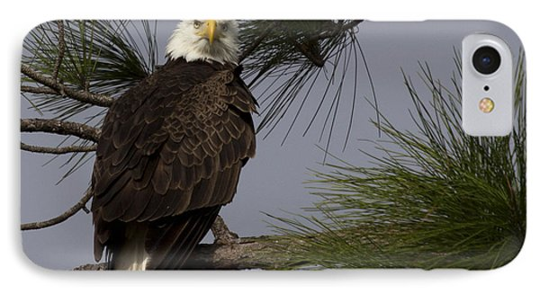 Harriet The Bald Eagle IPhone Case by Meg Rousher