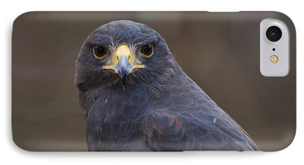 Harris Hawk IPhone Case by Chris Flees