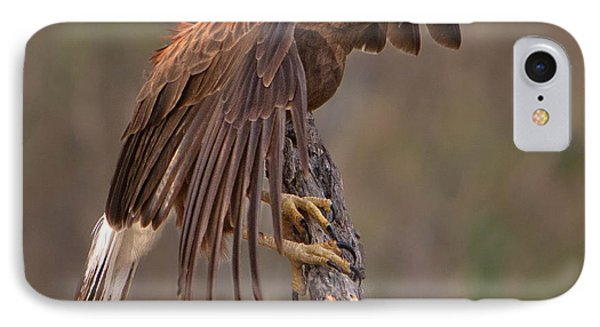 Harris's Hawk 1 Phone Case by Jerry Fornarotto