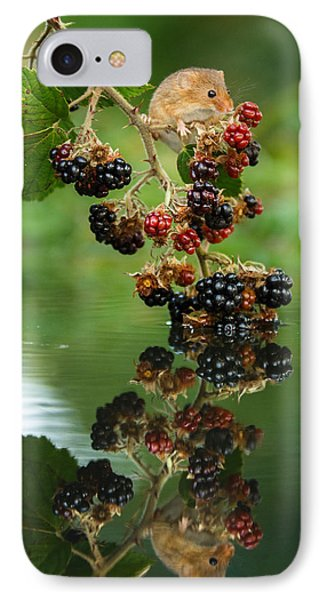 Harvest Mouse On Blackberries With Reflection IPhone Case by Izzy Standbridge