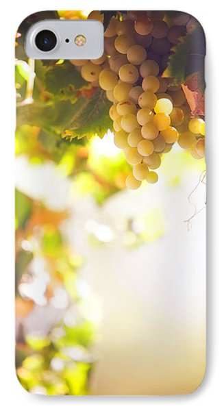Harvest Time. Sunny Grapes I Phone Case by Jenny Rainbow