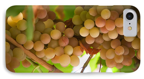 Harvest Time. Sunny Grapes II Phone Case by Jenny Rainbow